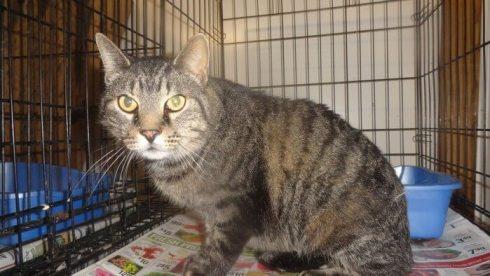 Tigger grey cat