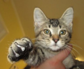 Edwin cat
