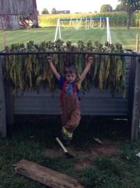 Little tobacco farmer 4