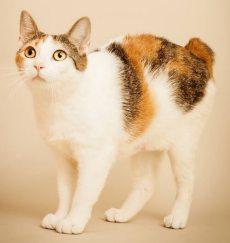 Olivia cat