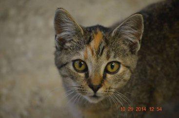 Mischa cat