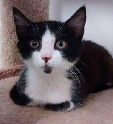 Ying Yang cat