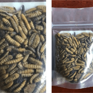 Black Soldier Fly Larvae- whole