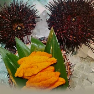 FRESH WILD SEA URCHIN / UNI