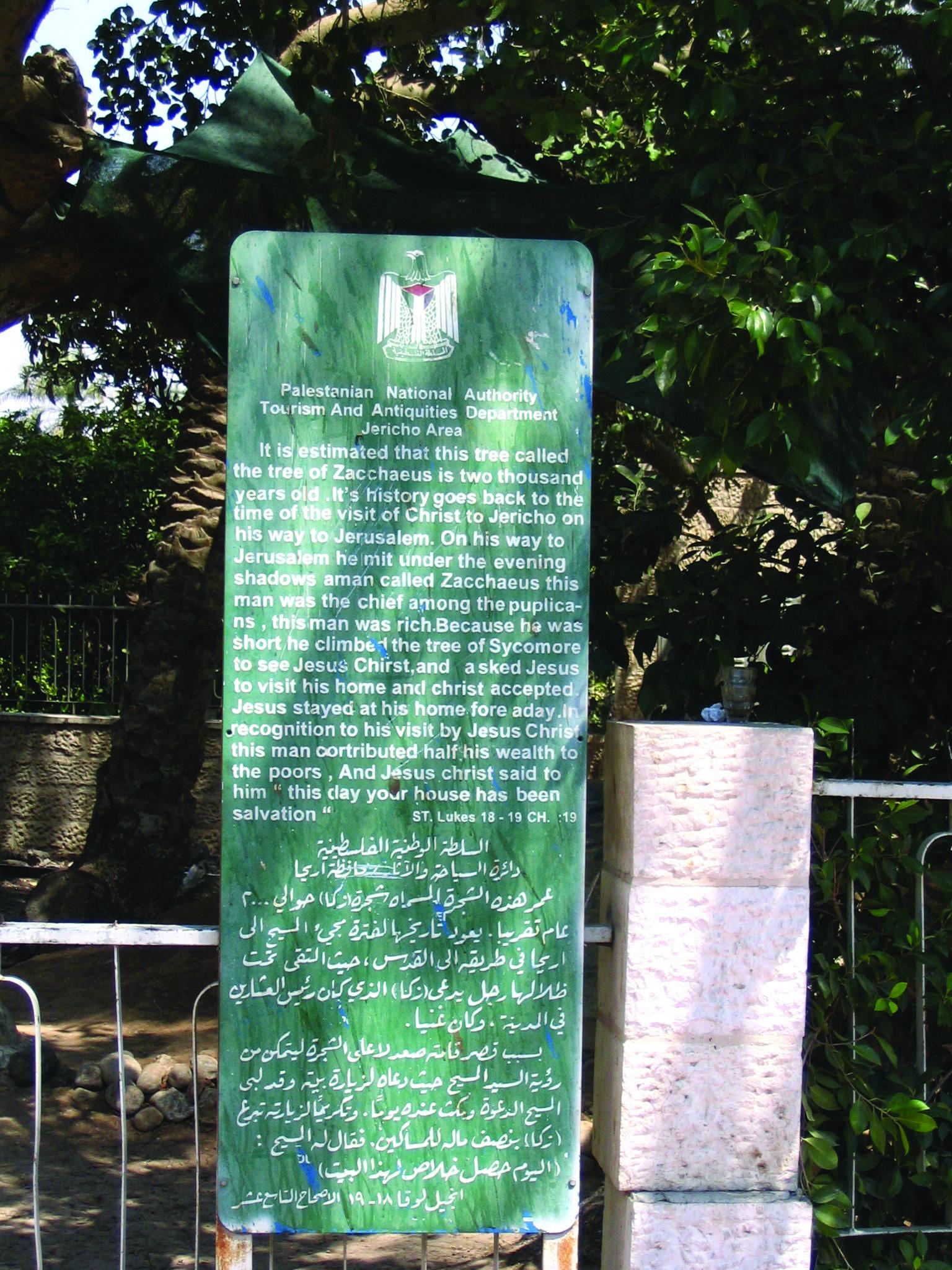 The Tree Of Zacchaeus In Jericho Israel
