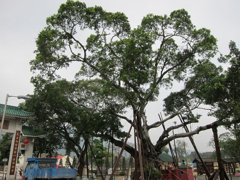 林村許願樹 Hong Kong Wishing Tree