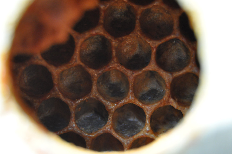 Some honey comb as seen through the entrance of a beehive.