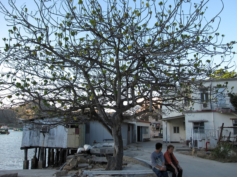 Wishing tree at lamma island ? Ha