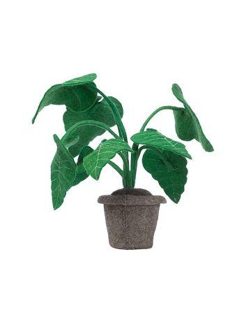 Vilten decoratieplant – Alocasia