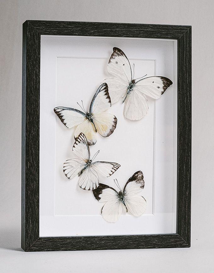 Witte vlinders in kader