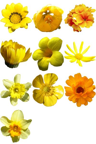 10 Hr Yellow Flowers Packs Pack 01
