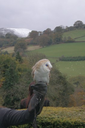 Olivia the owl, Brecon