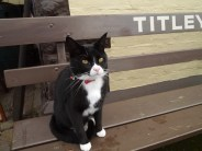 Sooty, the station cat