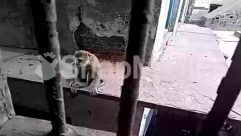 Animal, Baboon, Banister, Brick, Bunker, Concrete, Corridor, Door, Gravel, Handrail, House, Monkey, Nature, Outdoors, Pavement, Sun Light, Window