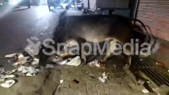 Alley, Alleyway, Animal, Asphalt, Auto, Building, Cattle, City, Cow, Dairy Cow, Ditch, Gravel, Human, Light, Mammal, Market, Motor Scooter, Nature, Night, Outdoors, Pedestrian, Person, Pollution, Road, Scooter, Street, Town, Trash, Urban