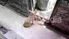 Alley, Alleyway, Animal, Brick, Canine, Concrete, Ditch, Dog, Door, Gravel, Housing, Path, Pet, Rock, Street, Sun Light