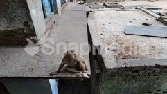Animal, Banister, Brick, Building, Bunker, Concrete, Corridor, Gravel, House Building, Housing, Human, Monkey, Nature, Sun Light, Terrace