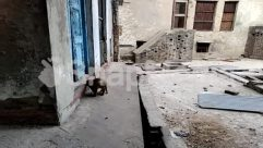 Animal, Apparel, Banister, Brick, Building, Concrete, Corridor, Gravel, House Building, Monkey, Sun Light, Terrace