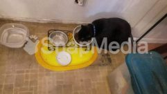 Meal, Black Cat, Eating, Cat, Dog, Manx, Puppy, Pet, Dish, Accessory, Canine, Floor, Bowl, Flooring, Room, Food