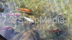 Angler, Animal, Aquatic, Art, Bird, Carp, Coho, Crawdad, Dirt Road, Fish, Fishing, Food, Goldfish, Gravel, Human, Koi, Leisure Activities, Nature, Outdoors, Person, Plant, Road, Rock, Sea Life, Seafood, Shrimp, Soil, Water