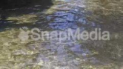 Animal, Coho, Creek, Fish, Lake, Land, Nature, Outdoors, Pond, Ripple, River, Rock, Stream, Water