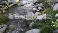 River,Plant,Outdoors,Nature,Creek,stream