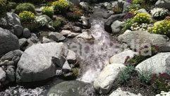 Blossom, Bush, Creek, Flower, Forest, Green, Jungle, Land, Landscape, Moss, Nature, Outdoors, Plant, Rainforest, River, Rock