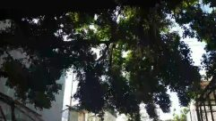 Plant, Tree, Tree Trunk, Outdoors, Garden, Vegetation, Arbour, Flare, Light, Nature, Patio, Building, Sunlight, Grass, Land