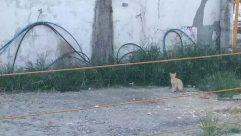 Animal, Mammal, Cat, Pet, Nature, Symbol, Arrow, Plant, Tree, Canine, Outdoors, Strap, Wildlife, Transportation, Person