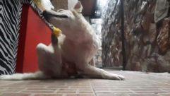Pet, Canine, Heel, Dog, Cat, scratching
