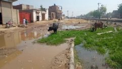 Person, Cow, Cattle, Nature, Urban, Building, Outdoors, Buffalo, Wildlife, Puddle, Flood, Transportation, Vehicle