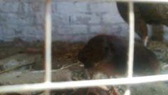 Animal, Bird, Fowl, Poultry, Mammal, Pet, Canine, Dog, Zoo, Chicken, Hen, Rodent, Wildlife, Window, Picture Window