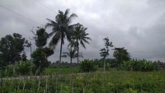 Nature, Plant, Vegetation, Outdoors, Summer, Field, Land, Weather, Tree, Grassland, Countryside, Arecaceae, Palm Tree, Tropical, Rural