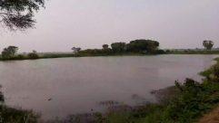 Nature, Water, Outdoors, Land, Animal, Bird, Reservoir, Shoreline, Sea, Ocean, Lake, Plant, Vegetation, Coast, River