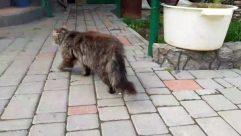 Flagstone, Path, Walkway, Animal, Mammal, Pet, Cat, Sidewalk, Pavement, Brick, Kitten, Dog, Canine, Abyssinian, Outdoors