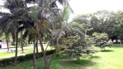Plant, Tree, Vegetation, Garden, Arbour, Palm Tree, Arecaceae, Land, Jungle, Food, Yard, Fruit, Tree Trunk, Vegetable, Nut