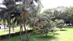 Plant, Tree, Vegetation, Garden, Arbour, Palm Tree, Arecaceae, Land, Jungle, Food, Yard, Fruit, Tree Trunk, Vegetable, Nut
