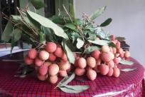 Plant, Food, Fruit, Raspberry, Vegetation, Bush, Sweets, Confectionery, Leaf, Strawberry, Blossom, Flower, Petal, Produce, Dessert