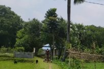 Building, Plant, Vegetation, Tree, Countryside, Rural, Shelter, Housing, Land, Palm Tree, Arecaceae, Hotel, Grass, Yard, Hut