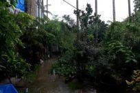 Vegetation, Plant, Tree, Land, Rainforest, Urban, Building, Garden, Jungle, Woodland, Grove, Forest, Arbour, Water, Town