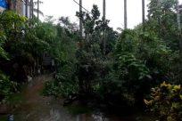 Plant, Vegetation, Land, Tree, Rainforest, Jungle, Building, Water, Yard, Woodland, Forest, Urban, Grove, Housing, Interior Design
