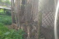 Zoo, Plant, Vegetation, Bush, Yard, Tree, Woodland, Land, Forest, Wildlife, Cheetah, Fence, Path, Grove, Jungle