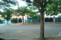 Plant, Tree, Road, Building, Urban, Street, Town, City, Automobile, Vehicle, Car, Vegetation, Tree Trunk, Path, Asphalt