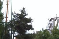 Plant, Tree, Palm Tree, Arecaceae, Amusement Park, Coaster, Roller Coaster, Building, Bridge, Vegetation, Abies, Fir, Theme Park, Housing, Construction Crane