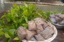 Leaf, Plant, Vegetation, Slate, Reptile, Snake, Wood, Flagstone, Vase, Jar, Potted Plant, Pottery, Blossom, Flower, Land