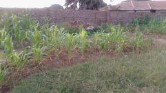 Yard, Plant, Soil, Backyard, Food, Produce, Vegetable, Jar, Vase, Potted Plant, Pottery, Field, Grass, Vegetation, Planter