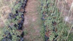 Grass, Plant, Soil, Brick, Vegetation, Path, Ground, Field, Countryside, Yard, Wall, Food, Blossom, Flower, Vine