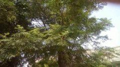 Vegetation, Plant, Land, Tree, Rainforest, Woodland, Forest, Bush, Jungle, Grove, Conifer, Oak, Leaf, Abies, Fir