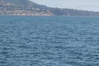 Sea, Ocean, Water, Vehicle, Watercraft, Vessel, Boat, Shoreline, Coast, Sea Life, Sailboat, Rowboat, Sport, Swimming, Sports