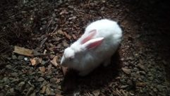 Bird, Rodent, Soil, Hare, Fish, Ground, Bunny, Rabbit, Rock, Poultry, Fowl, Chicken, Plant, Zoo, Canine